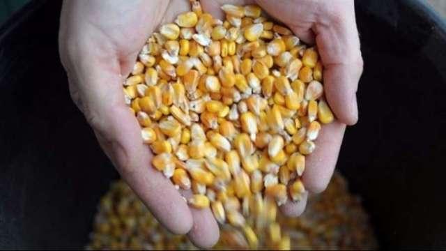 中國打壓+美元走強 從銅到玉米等原物料遭血洗。(圖片:AFP)