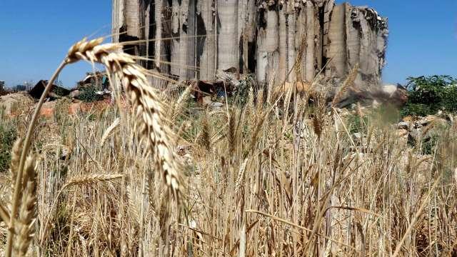 嚴峻旱災席捲美西 專家:水情不改善 穀價恐再漲逾30% (圖:AFP)