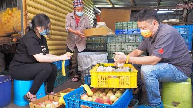雄獅員工前進新竹尖石鄉泰雅族水蜜桃產區,加入包裝及運送水蜜桃行列。(圖:雄獅提供)