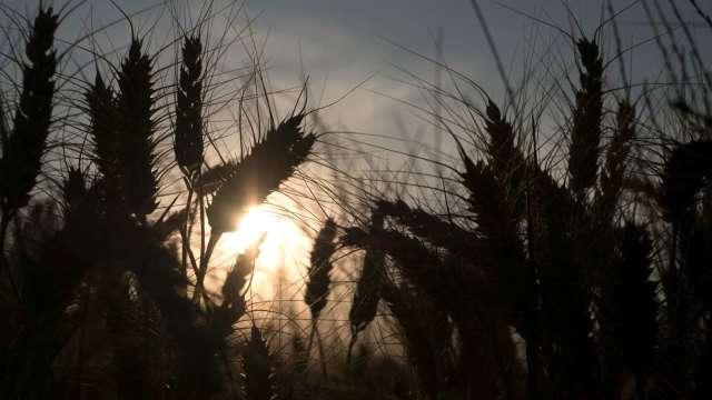 糧價高漲、運費飆升 食品買家遭受雙重打擊(圖:AFP)