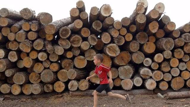 飆天價後暴跌 木材期貨今年來漲幅歸零 (圖:AFP)