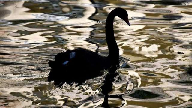 黑天鵝作者:比特幣一文不值 無法作為貨幣也沒有避險價值 (圖:AFP)