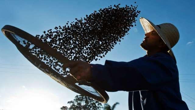 巴西咖啡豆受寒害衝擊 期貨價格飆7年新高(圖片:AFP)