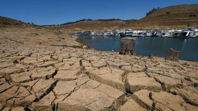 美國高溫乾旱持續 農作物枯萎 全球糧價漲勢難擋(圖:AFP)