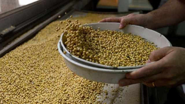 颶風重創美國農糧出口 黃小玉短線有壓。(圖:AFP)