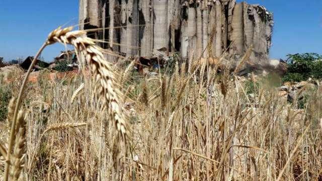 疫情+供應鏈混亂干擾 全球第三大糧商:原物料將進入高波動週期(圖:AFP)