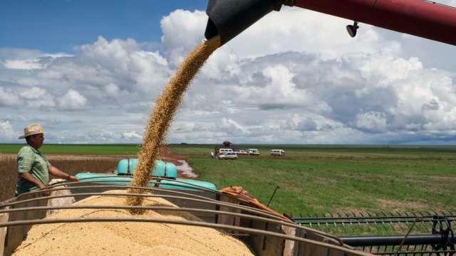黃豆、玉米周三由數月低點反彈 但產量預測不利後市(圖:AFP)